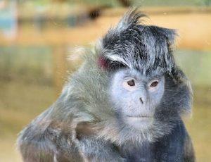 Howletts Wild Animal Park Safari Zoo Aspinall Foundation Kent